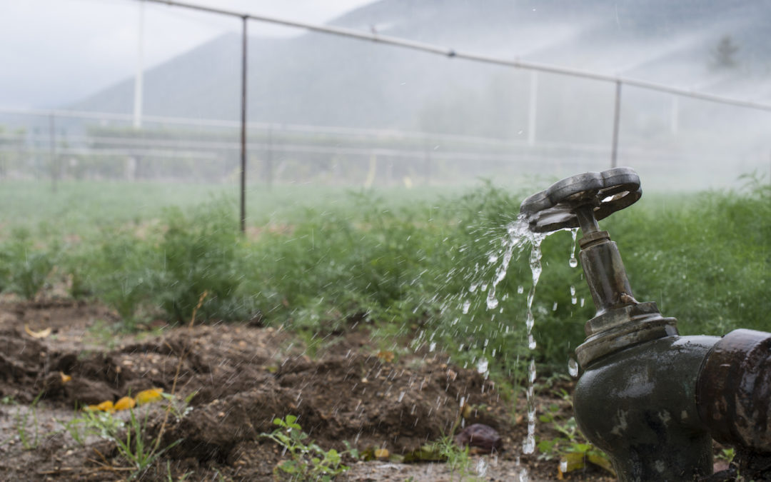 How Optimal Water Use Can Support Food Security, Reduce Waste in Africa